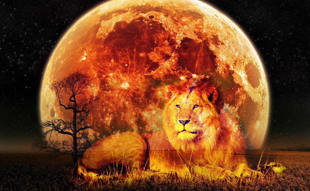 2021年獅子座新月:十二星座將會有何驚喜蛻變?