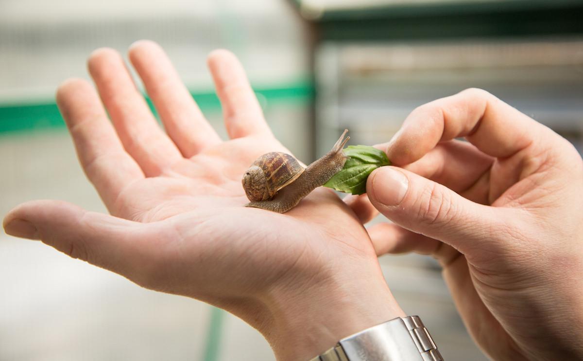飛來橫福:吃「蝸牛」也能獲得財富自由?還不吃起來!