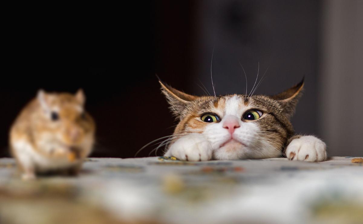 日本神準的心理測驗:當貓遇上老鼠,會怎麼樣呢?